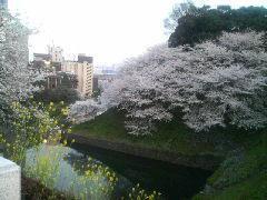 桜の旅ちゅう♪